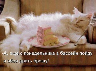Мурлыки жгут! ;) 20 забавных картинок прямиком из соцсетей…)