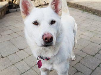 Судьба-злодейка! Что пришлось пережить несчастной собаке с корейской свалки…