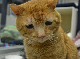 Самый грустный кот в мире нашёл себе дом! Может, теперь он перестанет грустить? :)
