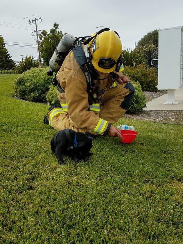 Хозяин просил спасти питомца из огня. Пожарники вытащили его но... это был точно не питомец! рис 3