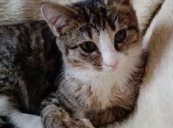 История о кошке Машке :)