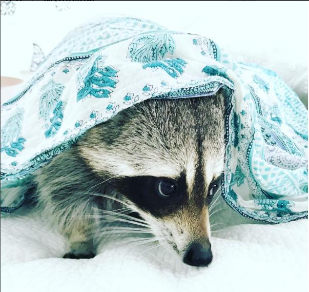 Публичная жизнь домашних животных! Топ самых популярных питомцев в Instagram рис 2