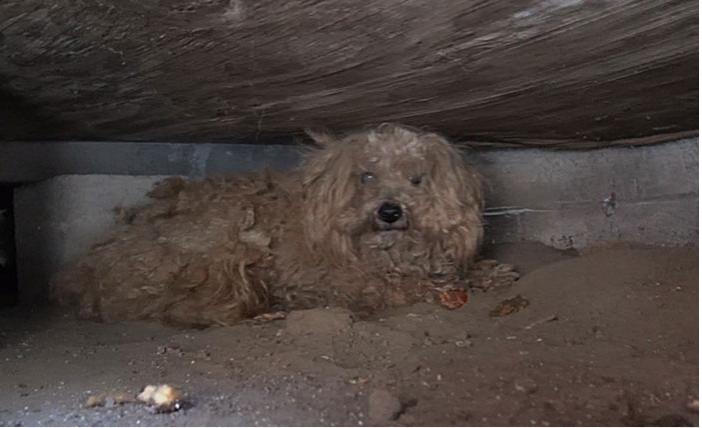 Брошенный пёс не подпускал к себе помощь... Но спасатели смогли завоевать его сердце!