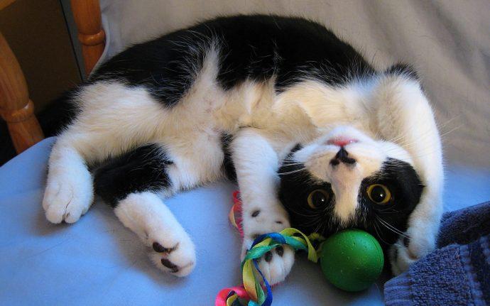 Помогите, мой кот царапает малыша! Что делать??? :(