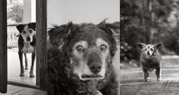 облога собаки