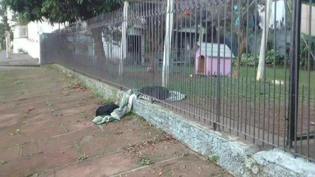 Собачка Лана утащила из дома одеяло… Хозяйка была тронута до глубины души, когда узнала зачем! рис 2