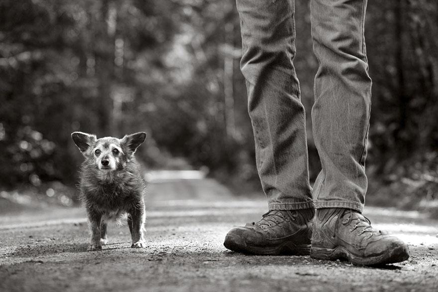 После ухода своих собак она стала фотографировать пожилых питомцев... Только посмотрите в эти глаза!