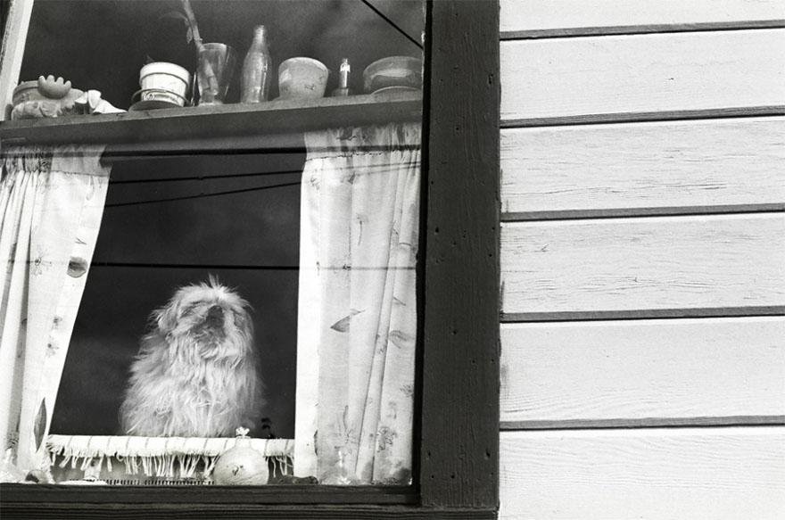 После ухода своих собак она стала фотографировать пожилых питомцев... Только посмотрите в эти глаза! рис 10