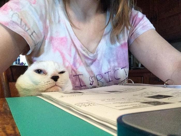 """""""Он похож на тюленёнка..."""" Девушка решила взять из приюта лечебного кота - и не прогадала! рис 8"""