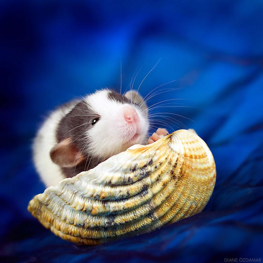 Милота с хвостиком!) Эти крыски доказывают, что грызуны - самые милые питомцы рис 11