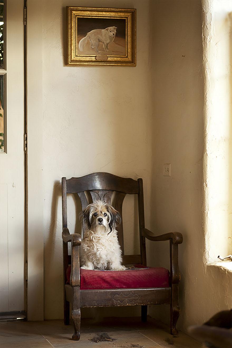 После ухода своих собак она стала фотографировать пожилых питомцев... Только посмотрите в эти глаза! рис 12