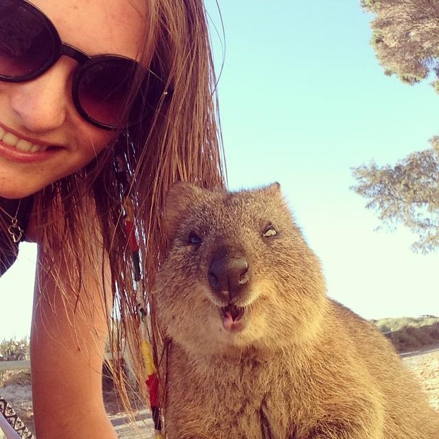 Самая искренняя улыбка в мире животных :) Ох уж эти удивительные квокки! рис 13