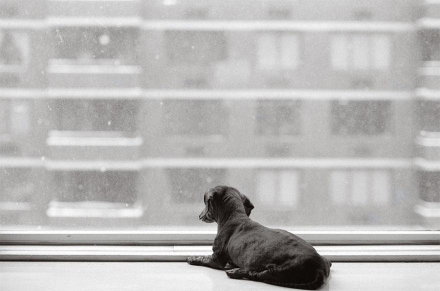 После ухода своих собак она стала фотографировать пожилых питомцев... Только посмотрите в эти глаза! рис 14