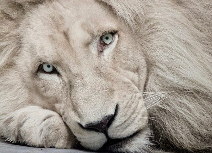 А ты один такой на свете...Топ-7 животных, которые на грани выживания!