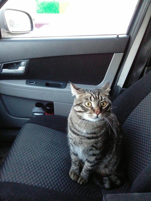 """""""Если бы я знала..."""" Дачники разобрали свой дом, чтоб найти... замечательного табби-котёнка!"""