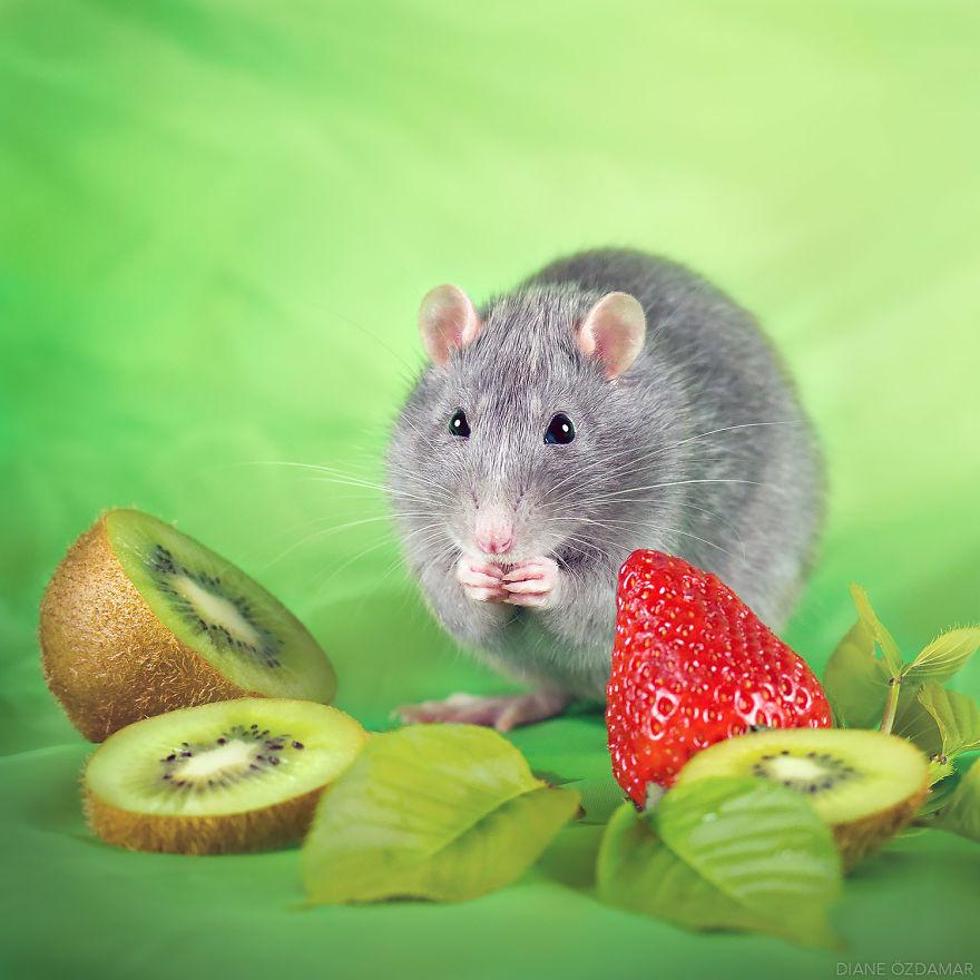 Милота с хвостиком!) Эти крыски доказывают, что грызуны - самые милые питомцы рис 15