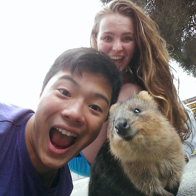 Самая искренняя улыбка в мире животных :) Ох уж эти удивительные квокки! рис 15