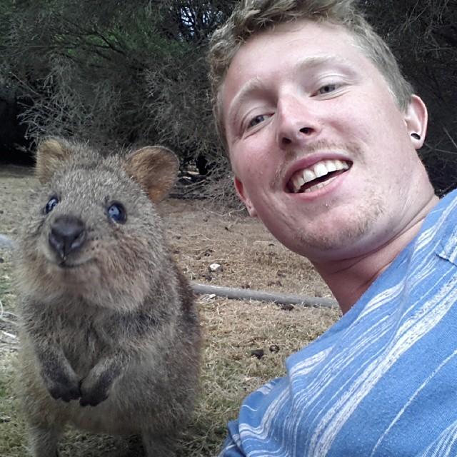 Самая искренняя улыбка в мире животных :) Ох уж эти удивительные квокки! рис 16