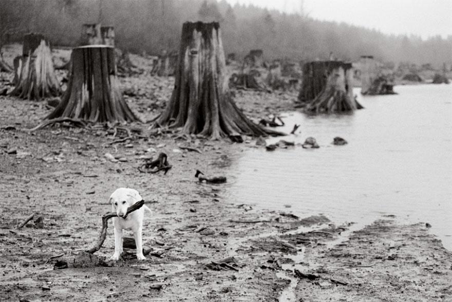 После ухода своих собак она стала фотографировать пожилых питомцев... Только посмотрите в эти глаза! рис 18