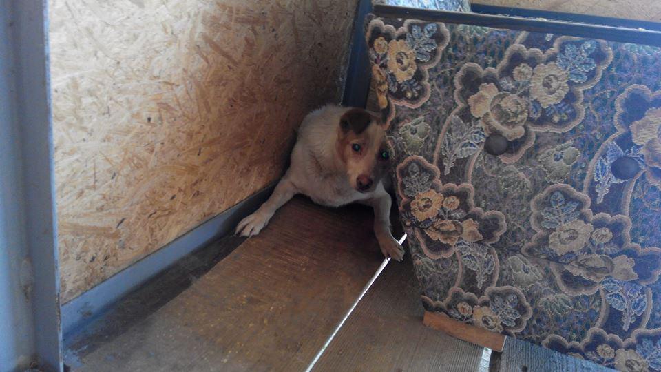 """Нетипичная история с хэппи-эндом: """"3 года назад собака упала в люк... Говорят, живёт там до сих пор!!!"""" рис 2"""