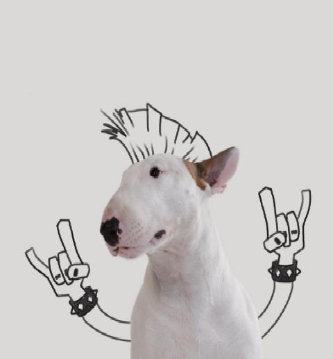 Публичная жизнь домашних животных! Топ самых популярных питомцев в Instagram рис 3