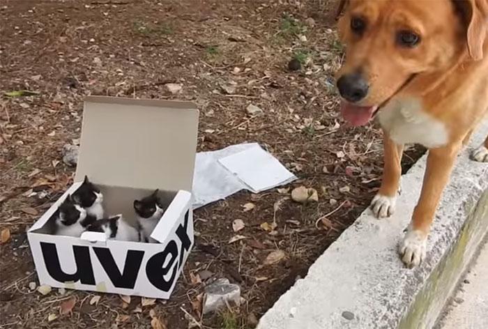 Он почувствовал, что кому-то нужна помощь... Собака с особенным чутьём спасла брошенных котят! рис 2