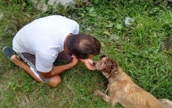 Нет таких ран, за которые он бы не взялся! Защитник животных из Бразилии спас безнадёжного щенка ) рис 2