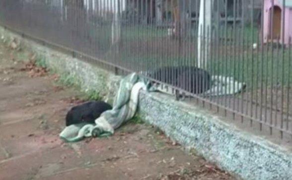 Собачка Лана утащила из дома одеяло… Хозяйка была тронута до глубины души, когда узнала зачем! рис 3