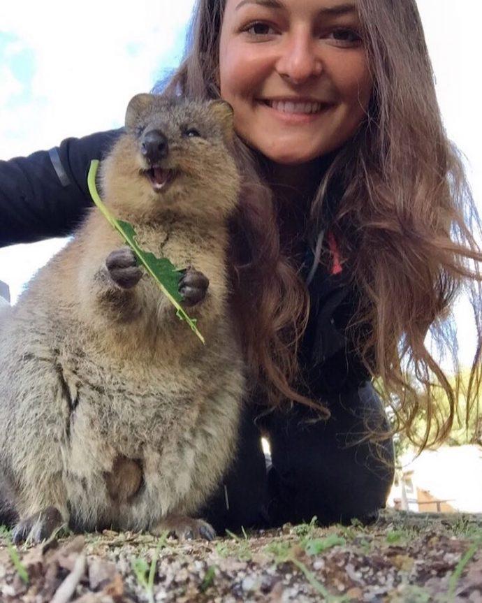 Самая искренняя улыбка в мире животных :) Ох уж эти удивительные квокки! рис 19