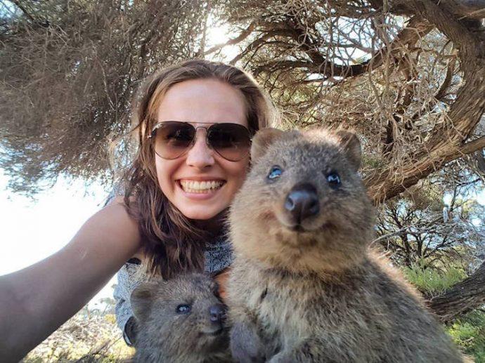 Самая искренняя улыбка в мире животных :) Ох уж эти удивительные квокки! рис 20
