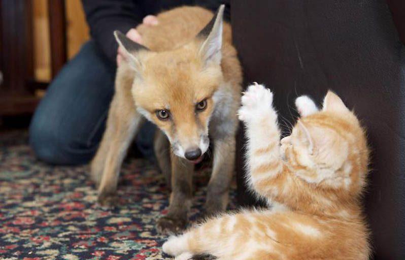Их нашли на обочине! Три брошенных котёнка и слепой лисёнок подарили друг другу семью)