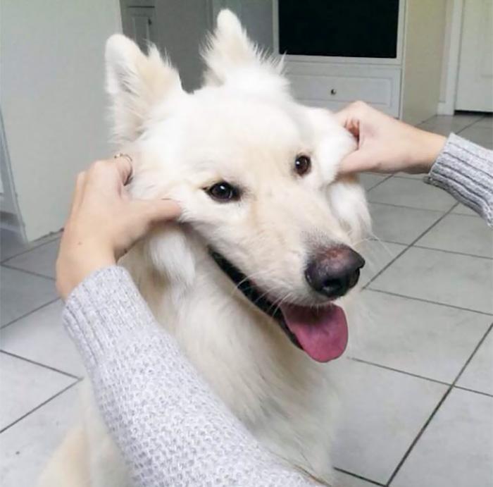 Щекастые и пушистые! 25 фото веселых собак, которые без ума от массажа щёк) рис 25