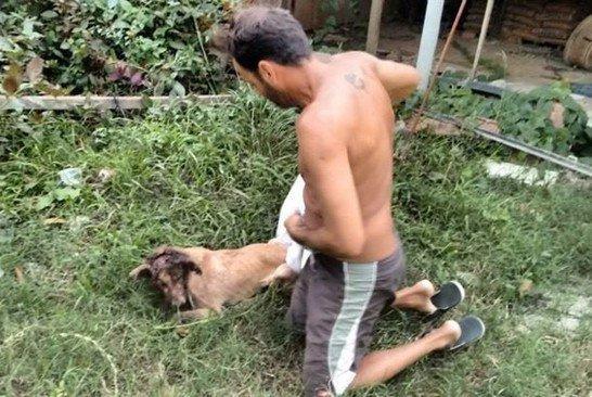 Нет таких ран, за которые он бы не взялся! Защитник животных из Бразилии спас безнадёжного щенка ) рис 3
