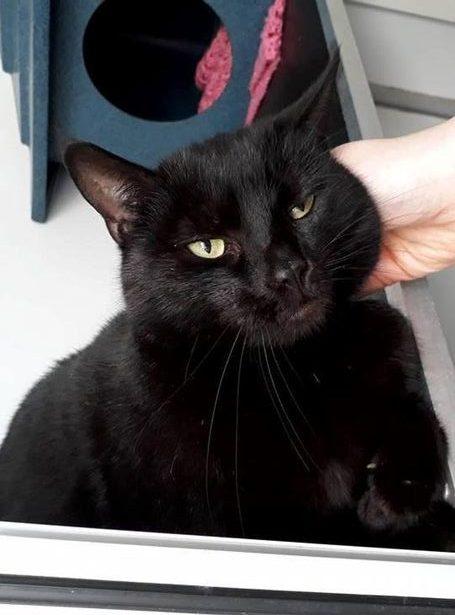 Чёрную кошку с птичьими лапками-сердечками бросили умирать на улице… Но она принесла кому-то счастье! :)