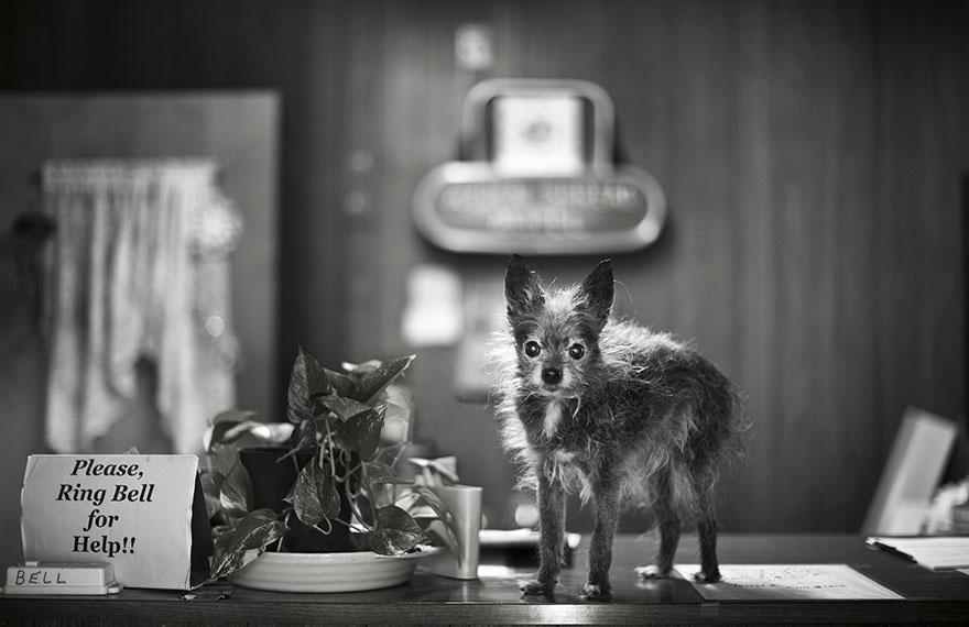 После ухода своих собак она стала фотографировать пожилых питомцев... Только посмотрите в эти глаза! рис 3