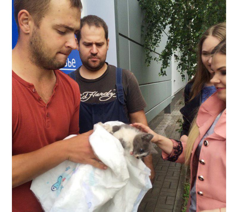 Он из последних сил просил о помощи! Девушка спасла котенка, просидевшего в ловушке 3 дня... рис 4
