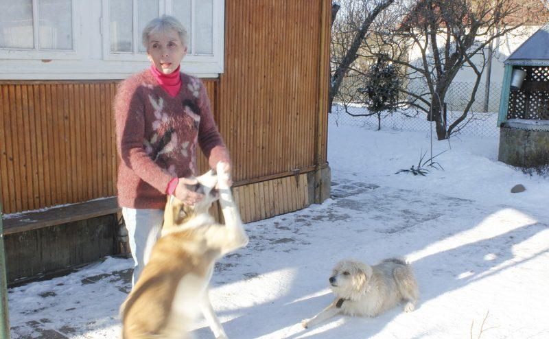 """""""Я просто не могу их бросить…"""" Женщина приютила около сотни бездомных животных, и сделала это красиво! рис 2"""