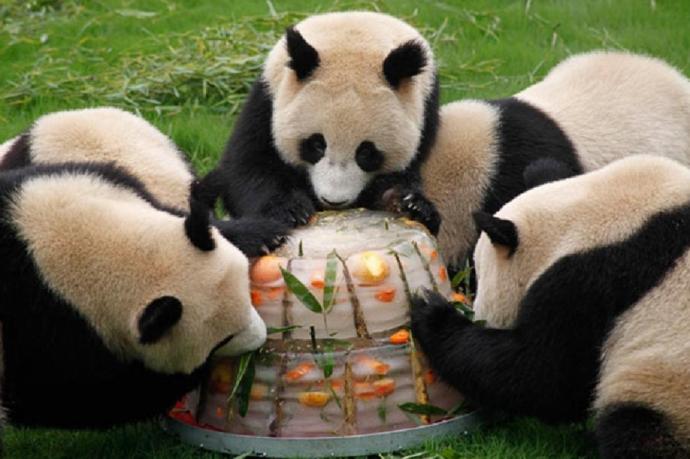 В зоопарк завезли... необычное мороженое! Что же таится в ледяных брикетах?