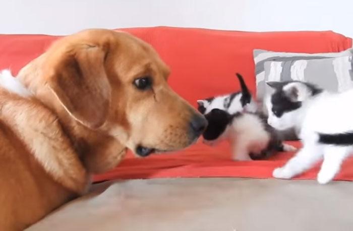 Он почувствовал, что кому-то нужна помощь... Собака с особенным чутьём спасла брошенных котят! рис 5