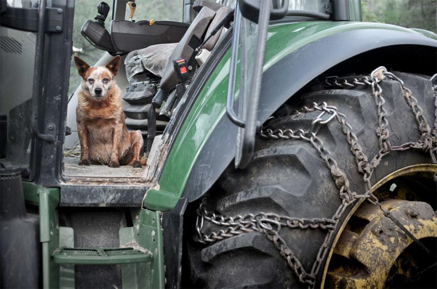 После ухода своих собак она стала фотографировать пожилых питомцев... Только посмотрите в эти глаза! рис 5