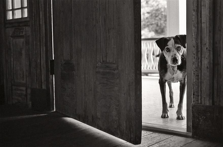 После ухода своих собак она стала фотографировать пожилых питомцев... Только посмотрите в эти глаза! рис 6
