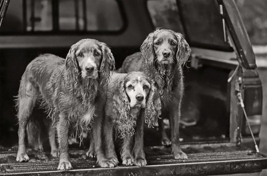 После ухода своих собак она стала фотографировать пожилых питомцев... Только посмотрите в эти глаза! рис 7