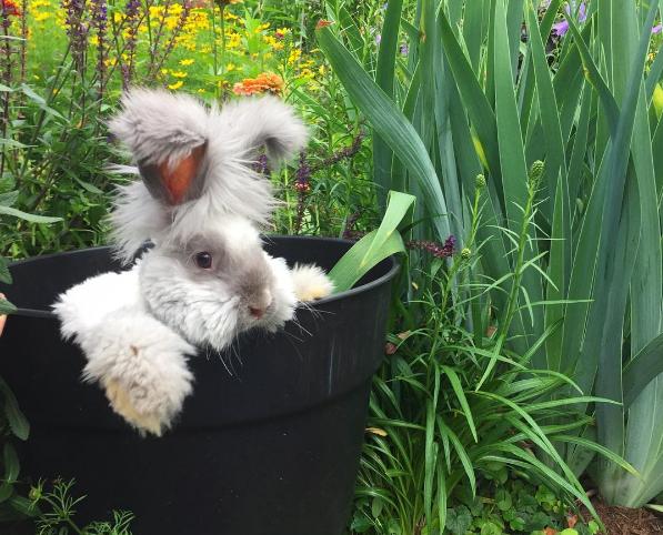 Публичная жизнь домашних животных! Топ самых популярных питомцев в Instagram рис 6