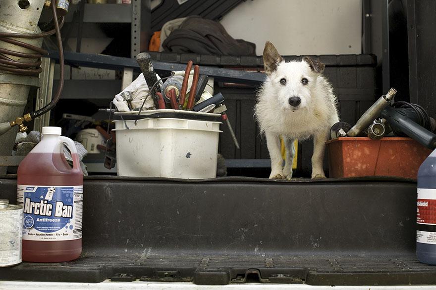 После ухода своих собак она стала фотографировать пожилых питомцев... Только посмотрите в эти глаза! рис 9