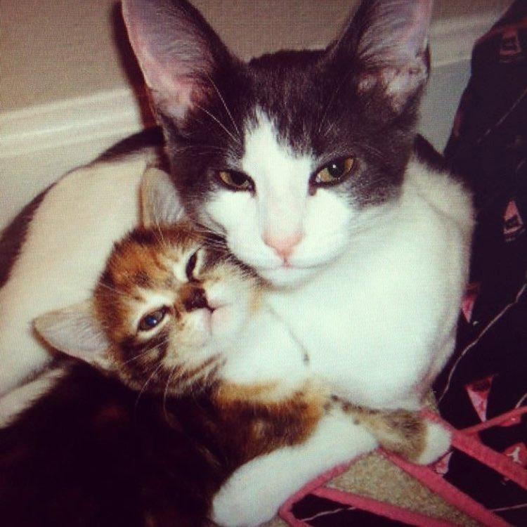 Чарли и шоколадная... аура! Сладкий котик стал папой 25 котят :)