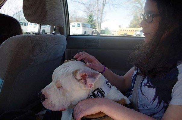 Он не видит, но чувствует всё... Милый домашне-улично-домашний пёс делится своей историей! :) рис 2