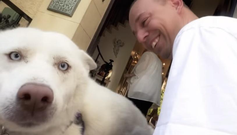 Чудесное спасение пса Майли! Хаски, который познал человеческую жестокость и милосердие... рис 4