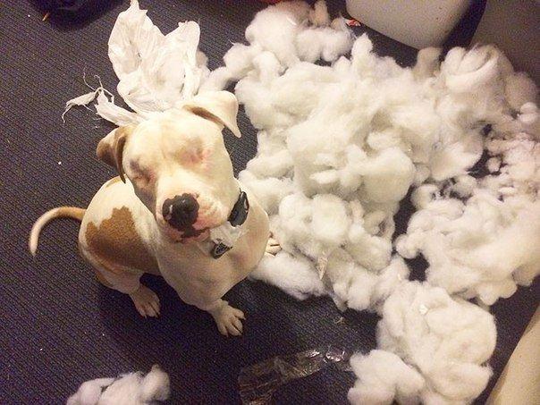 Он не видит, но чувствует всё... Милый домашне-улично-домашний пёс делится своей историей! :)