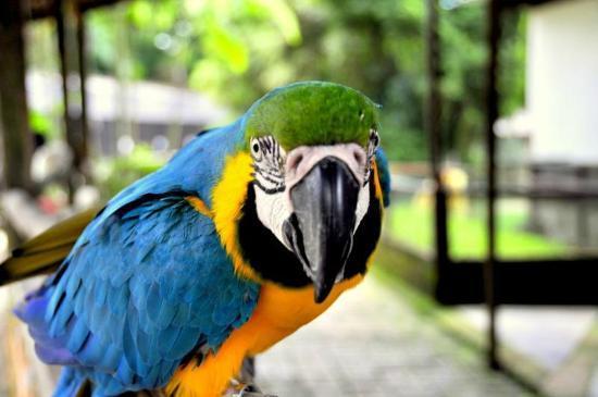 Talking-Parrot-10