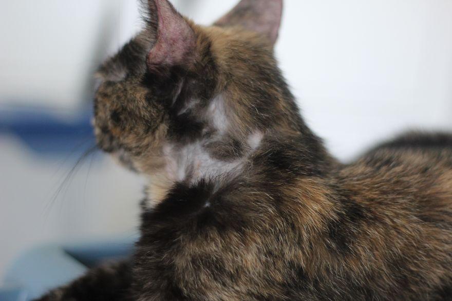 4 истории о брошенных кошках. И все со счастливым концом! Хотя, возможно, они не закончены... рис 3